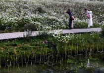 明湖濕地公園