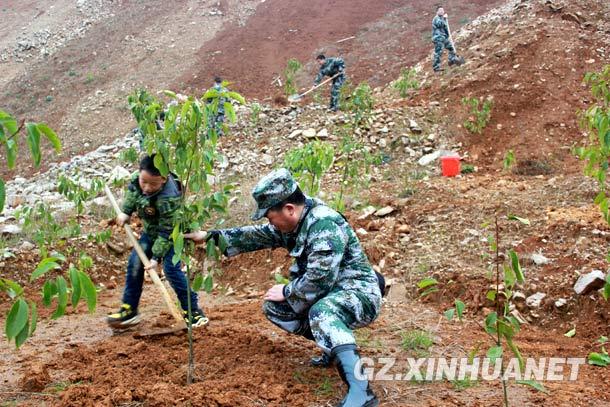 岑鞏計劃三年完成植樹四百萬余株