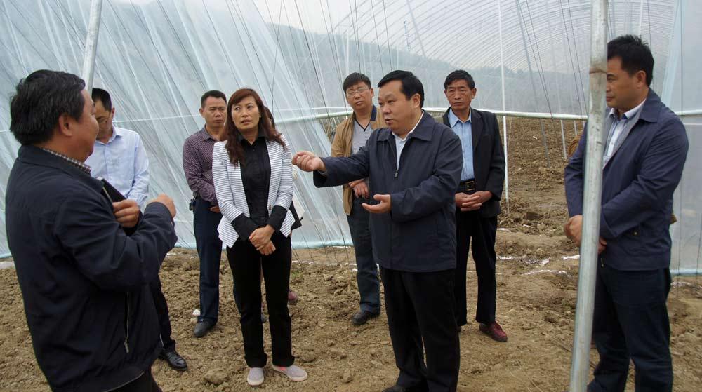 張珍強在合興鎮鳥坪村現代高效農業園區調研