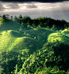 """丹寨:""""四個轉變""""打造現代山地高效生態農業"""
