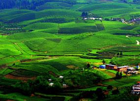 湄潭永興萬畝茶海