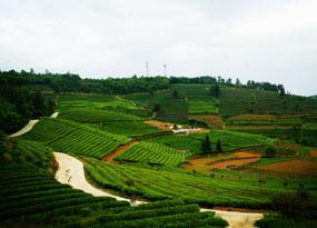 余慶二龍茶山景區