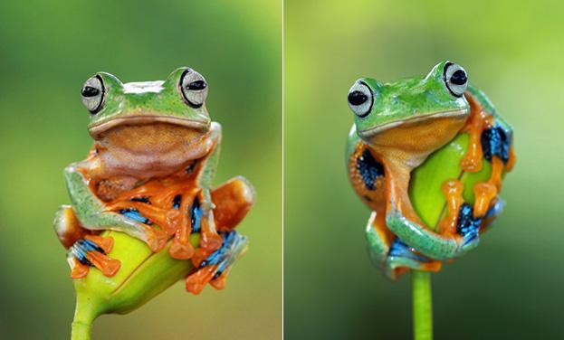 旅行青蛙步骤图解