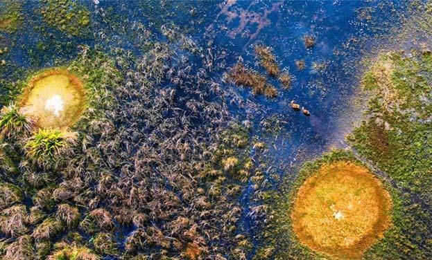 航拍非洲野生动物世界