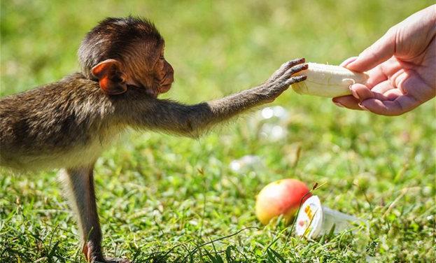 泰国华富里:古塔中的猴群乐园