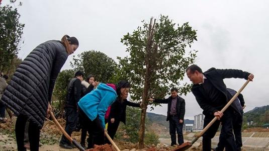 從江:節後上班第一天植樹添新綠迎立春