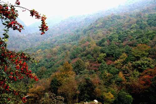 楓林火焰山原始植物保護區