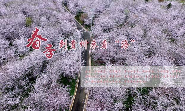"""春季到貴州來看""""海"""""""
