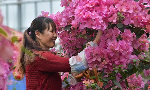 貴州開陽:村民家門口務工 精準扶貧助增收