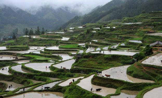 贵州黎平:牛耕节展现农耕文明