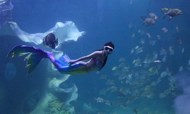 """梦幻海底""""美人鱼"""""""
