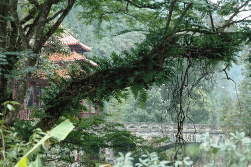 抱塘原始森林