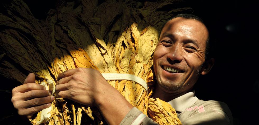 煙農豐收後的喜悅