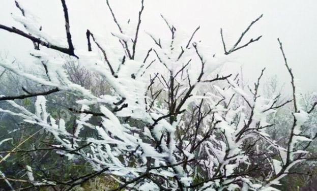 石阡大顶山现雾凇景观