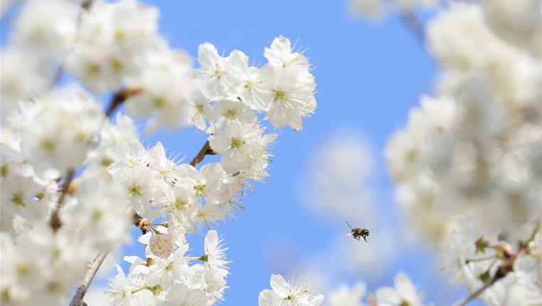 花開春意濃