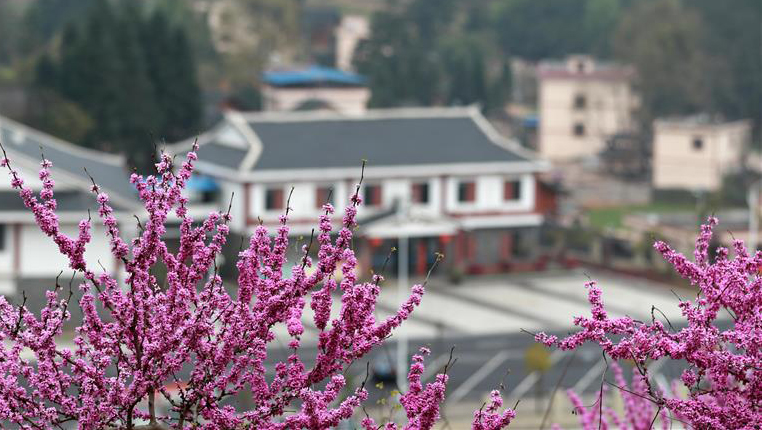 春來花盛開