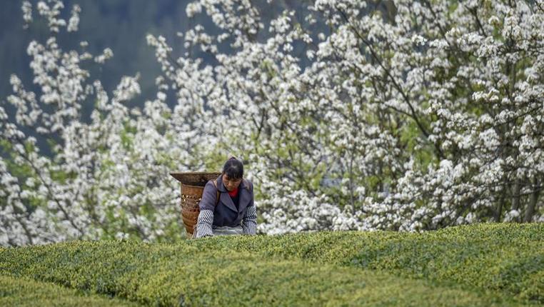 勞作在春日