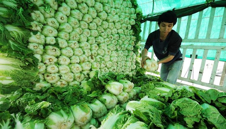贵州西秀区农户:怎么种我说了算,卖给谁公司说了算