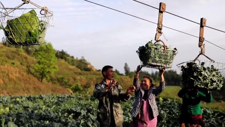"""蔬菜坐""""纜車""""!這個海拔704米的貧困村不簡單"""