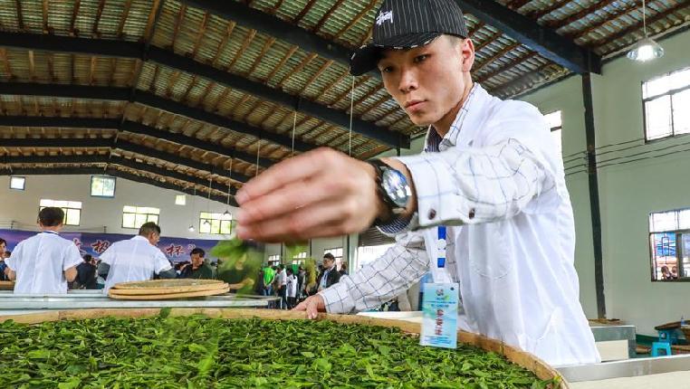 貴州舉辦古茶加工技能大賽