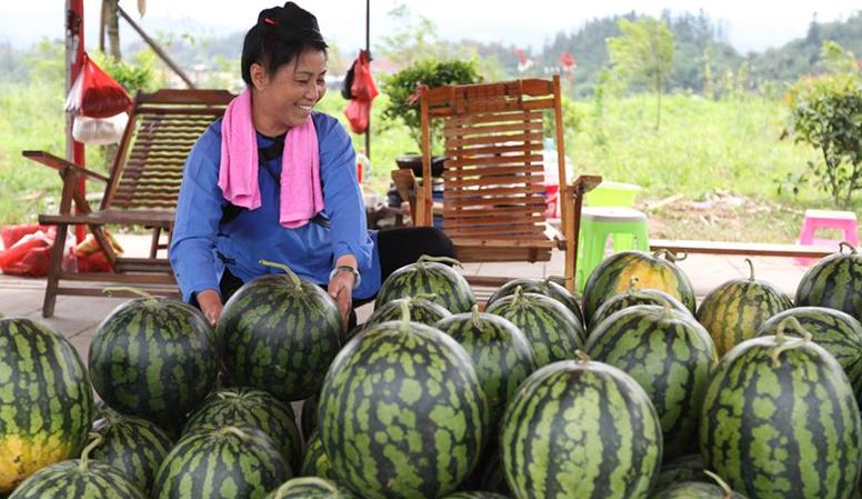 貴州榕江:西瓜喜獲豐收