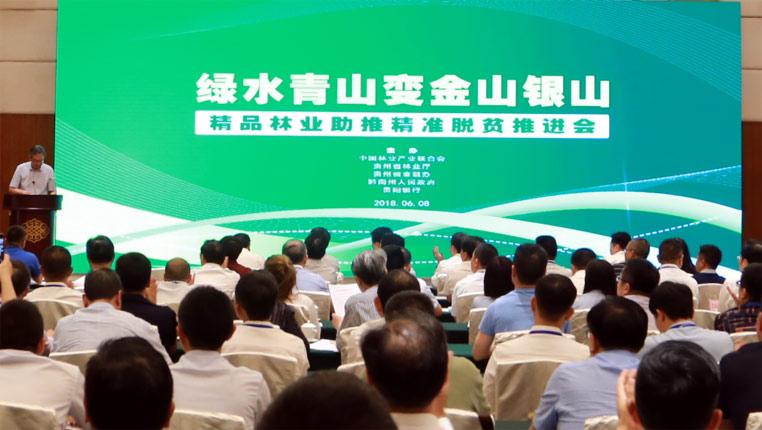 貴州:精品林業+綠色金融助推精準脫貧