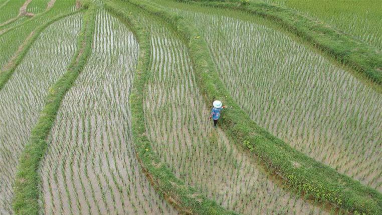 農忙在夏至