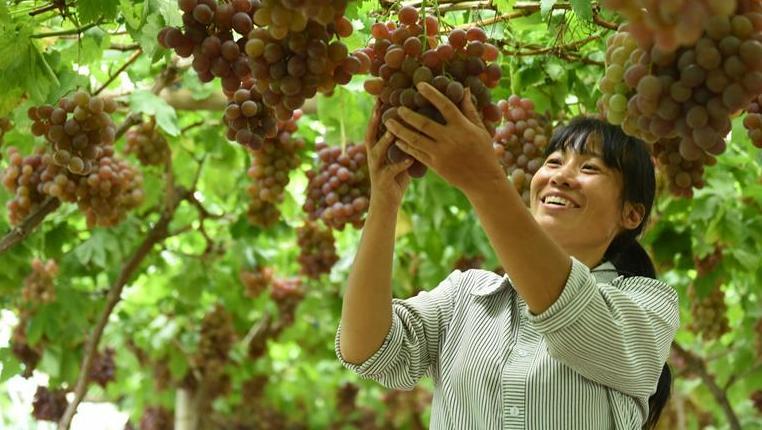"""貴州松桃:一名農村婦女的""""脫貧夢"""""""