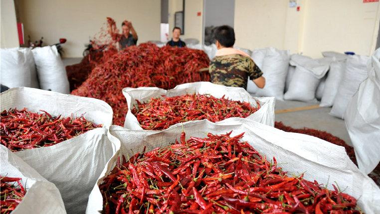 小辣椒成就紅火大産業