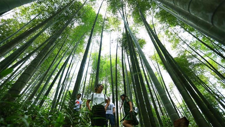 赤水森林覆蓋率82.77%列居全省第一