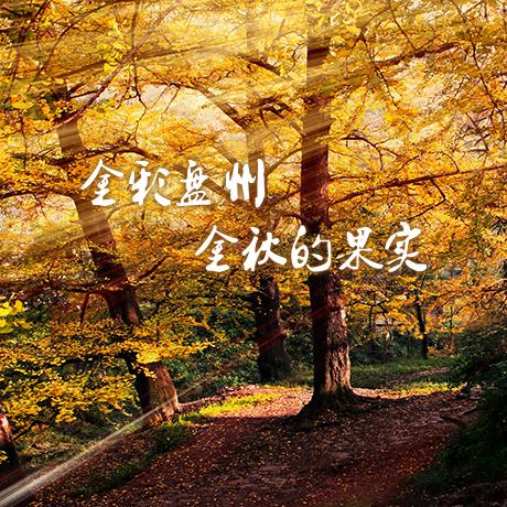 【H5】金彩盤州 金秋的果實