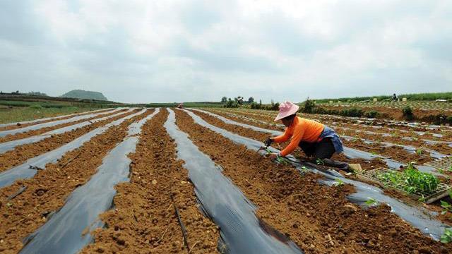 貴州西秀區農戶:怎麼種我説了算,賣給誰公司説了算