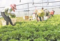 平壩平元村:蔬菜産業 助農增收