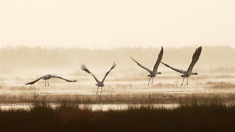 貴州草海陸續迎來越冬候鳥