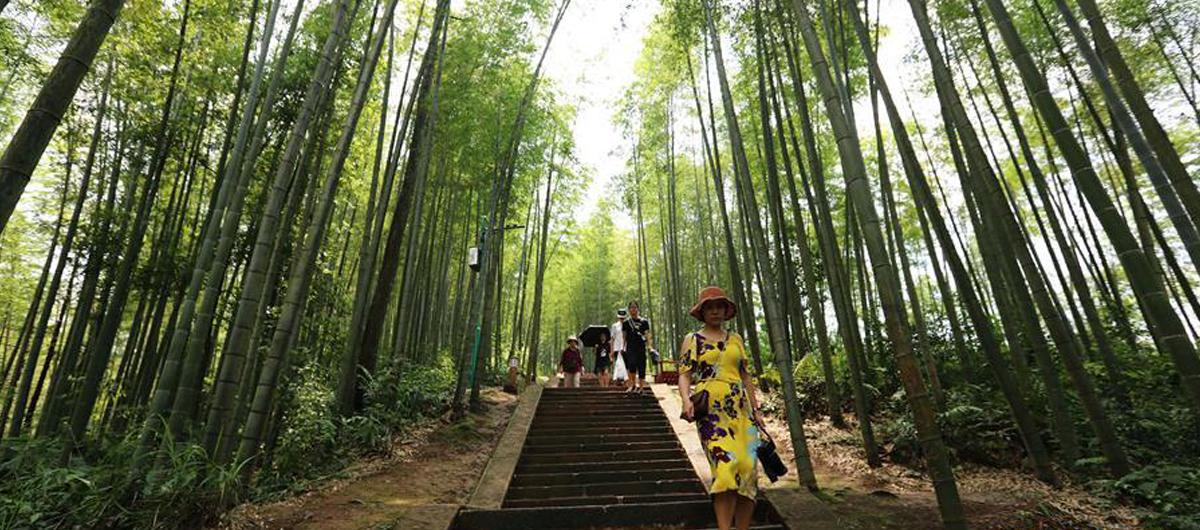 貴州赤水:一根竹子挑起生態與經濟兩端