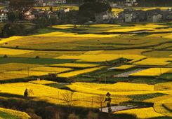 第五屆糧油精品展將在興義舉辦