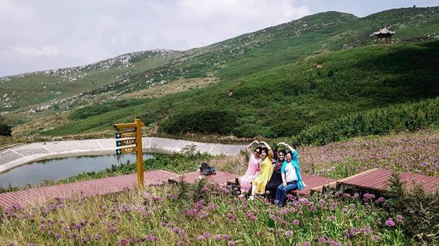 貴州六盤水:韭菜坪花開引客來