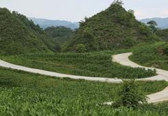 七星關:路路連民心 道道通幸福