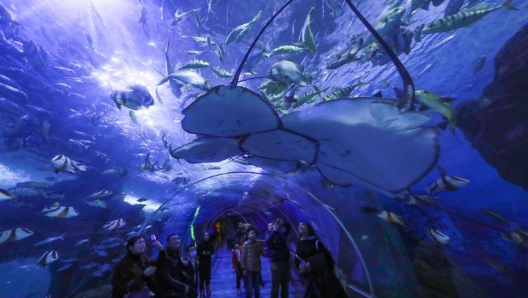 貴州貴陽:夢幻海洋世界