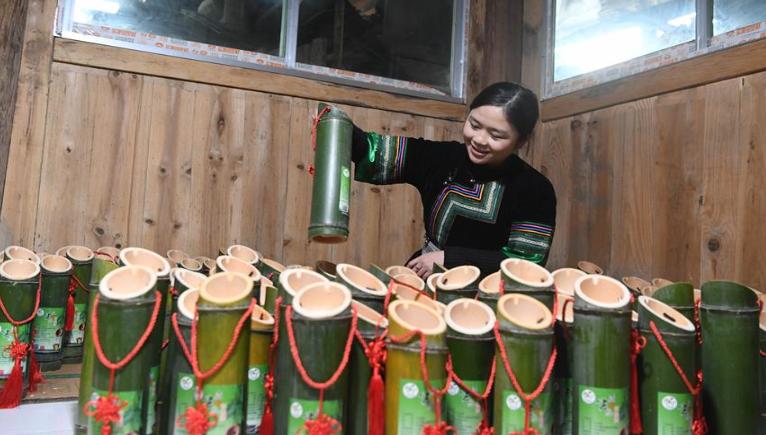 """貴州榕江:竹酒""""種""""出致富路"""