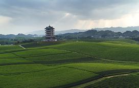 貴州:百姓富了 生態美了