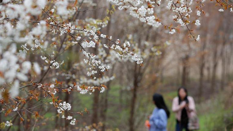 春來花正開