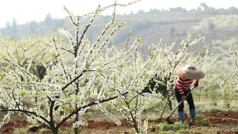 春分時節花伴農事