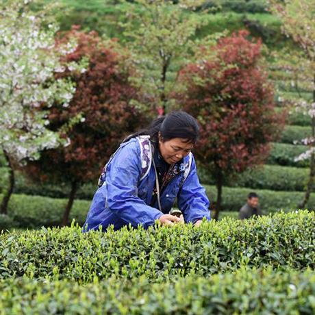 貴州茶博館成為貴州省科普教育基地