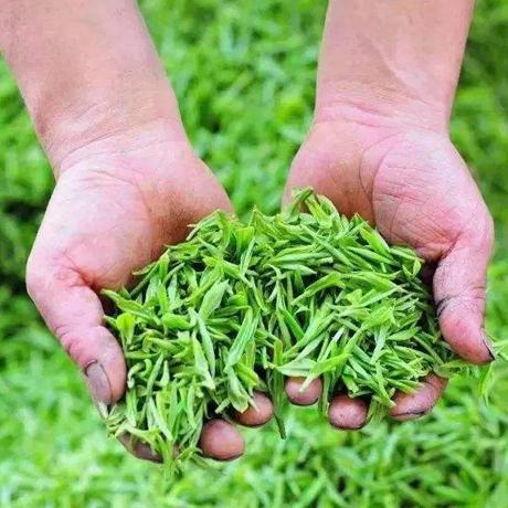 貴州茶産業邁上新臺階