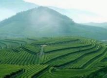 貴州茶全産業鏈轉型升級
