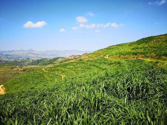 關嶺牛産業:助推農戶脫貧的幸福産業