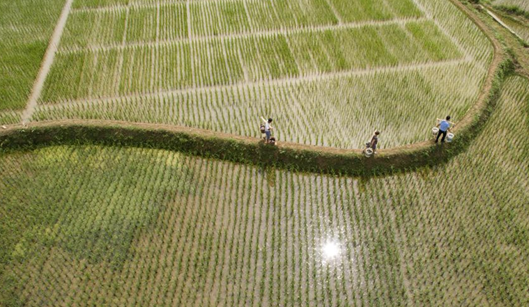 """貴州黔西:發展""""稻+N""""生態農業"""