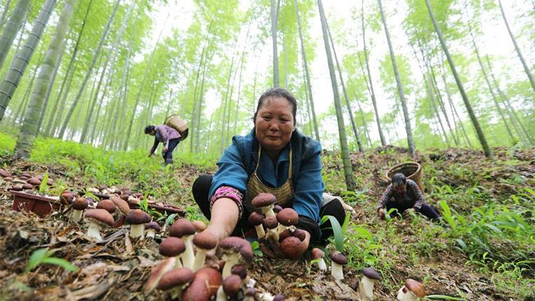 貴州:耕耘黔中大地 建設美麗田園