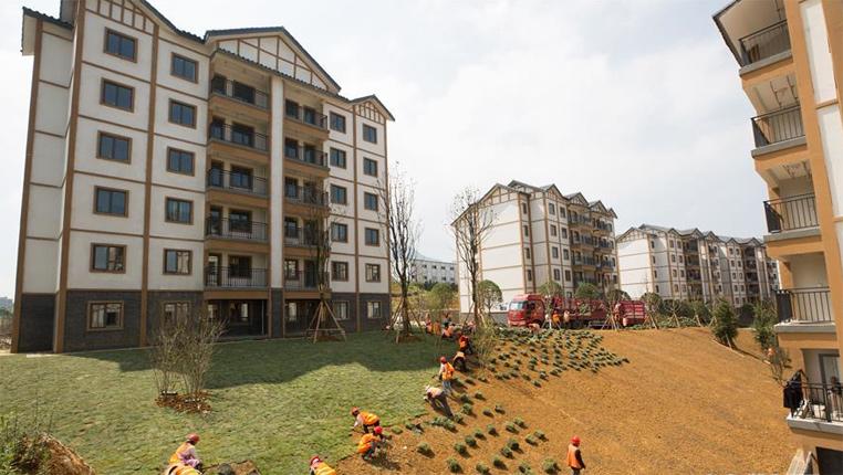 貴州大方:安置區裏綠化忙